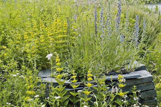 Trockenmauern Naturgarten Bewuchs