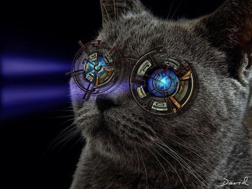 Die Sniperbrille für kurzsichtige Katzen