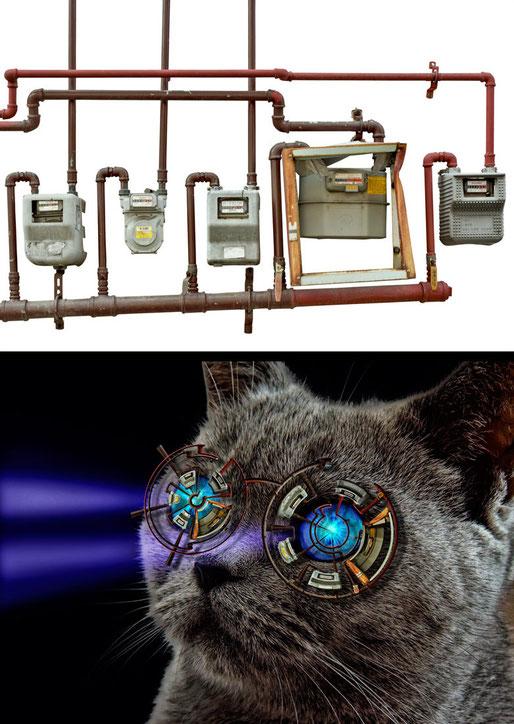 Verzerrungsfilter Polarkoordinaten: Sniper-Brille für kurzsichtige Katzen