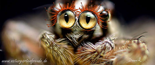 Fotomontage Spinne Wimpern Kulleraugen Kindchenschema  photomontage spider  saucer eyes cuteness
