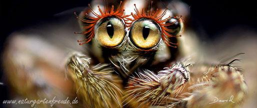 Fotomontage Spinne Wimpern Kulleraugen Kindchenschema  photomontage spider  saucer eyes cuteness
