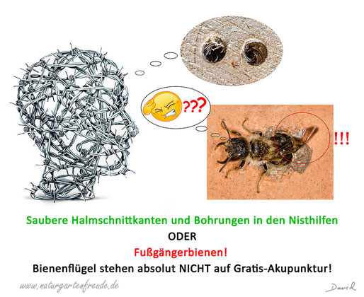 Insektenhotel Insektennisthilfen Nisthilfen insect hotel nesting aid bug house wildbee Wildbiene Negativbeispiel unsaubere Bohrungen Neudorff Nützlingswabe Mauerbienen