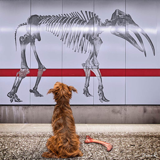 Fotomontage Hund Knochen Skelett  photomontage dog bones skeleton