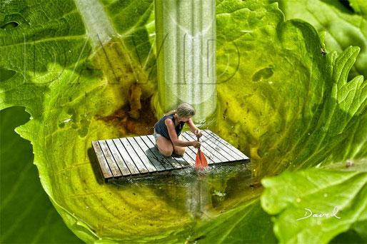 "Karde Dipsacus Phytotelmata ""Becken der Venus"" Fotomontage  teasel phytotelma photomontage"