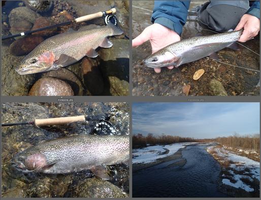 日中の気温がプラスになってきたらその年のシーズン開幕です。ライズがない時はニンフィングで遊びます。観察していなかったのは雪に閉ざされていた間だけなのに、思いのほか川の形は変わっています。だから、春いちばんの釣りはいい流れを探してひたすら歩く釣り。いいサイズも釣れてゲストも満足そうでした。水量のせいか場所によっては1投1尾になりました。