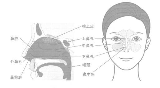 鼻の構造(内部)