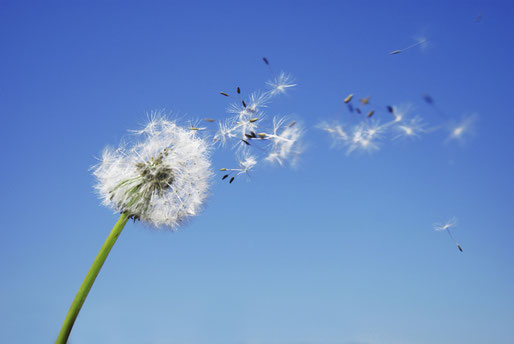 Bye Bye Allergies a Tours, annuaire Via Energetica