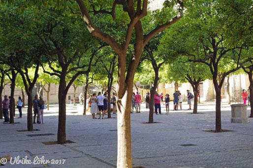 Orangenhof oder auch Patio de los Naranjos vor der Westfassade der Kathedrale von Sevilla