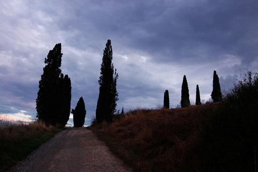 Abendstimmung, Lichtstimmung in der Toskana, Zypressen
