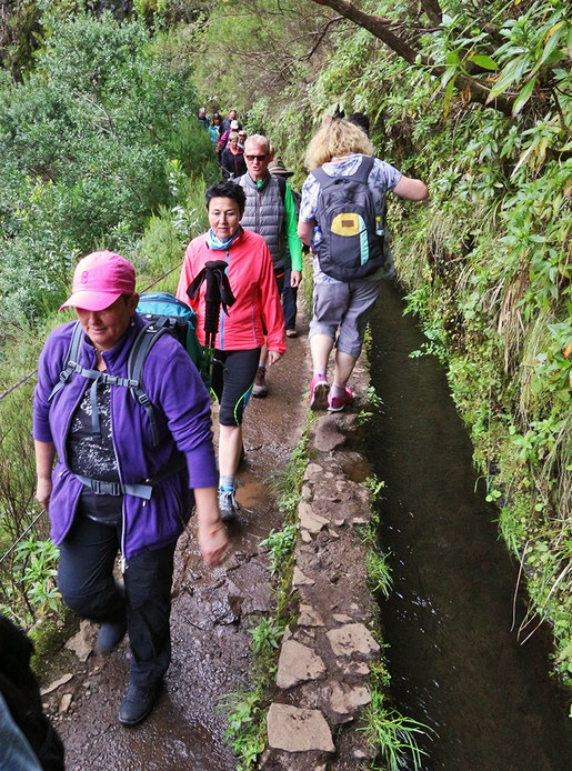 Starker Gegenverkehr auf dem 25 Quellen Wanderweg im Hochland von Madeira.