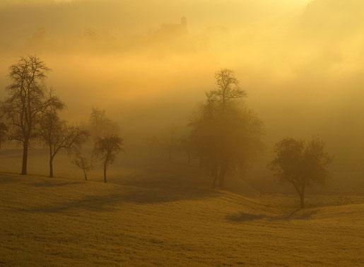 Pichl bei Wels, Nebel, Landschaft, Hartlauer Fotogalerie