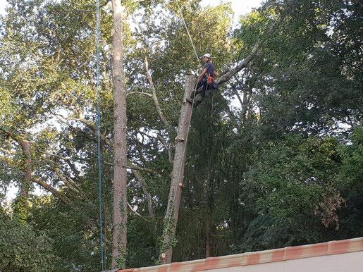 abattage arbre hautes pyrénées