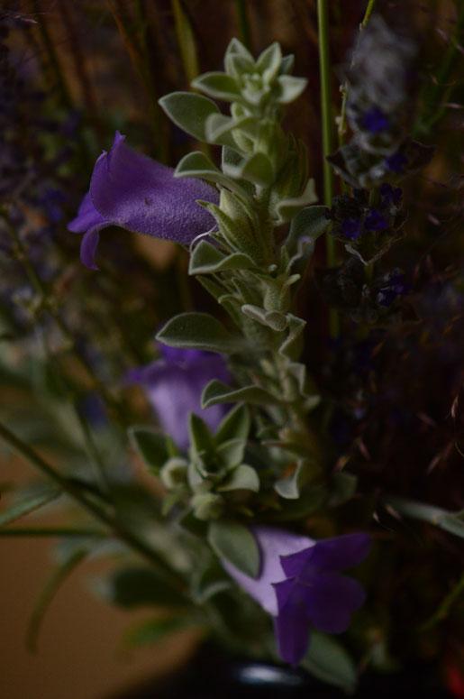 small sunny garden, desert garden, in a vase, monday, amy myers, monday vase, eremophila, hygrophana