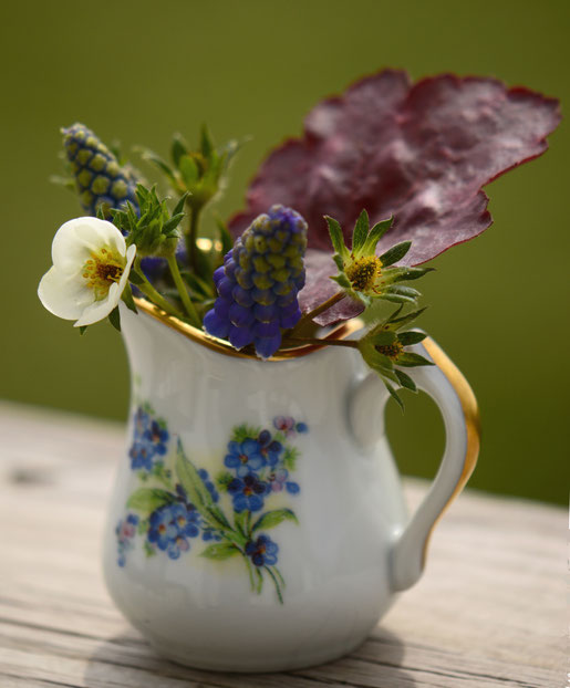 muscari, strawberry flower, and heuchera in vintage creamer for in a vase on monday