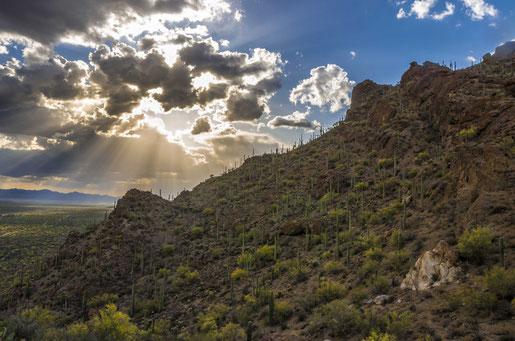 Sunset sonnenuntergang tucson saguaro national park arizona natur igoplaces.de