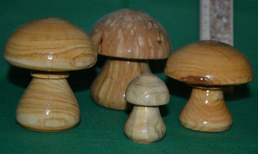 Pilze bis 25 cm Höhe