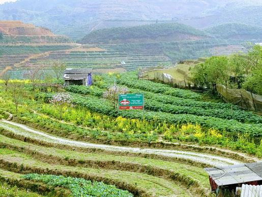 """Le panneau au milieu veut dire """"agriculture bio"""""""