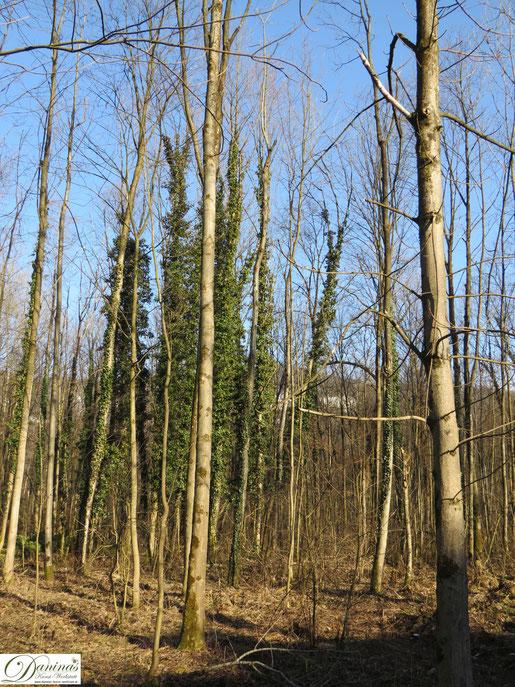 Frühling im Wald. Baum by Daninas-Kunst-Werkstatt.at