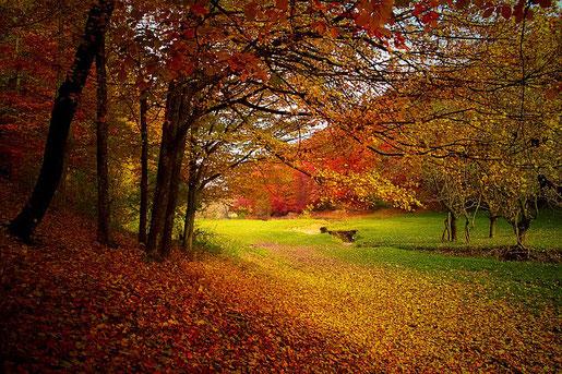 秋のドレッドヘアケア