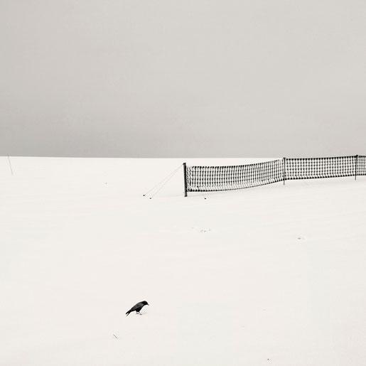 """""""The Bird"""" von Lena Weisbek"""