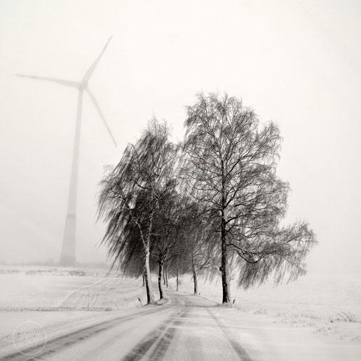 """""""Winter Trop"""" Art Print von Lena Weisbek"""