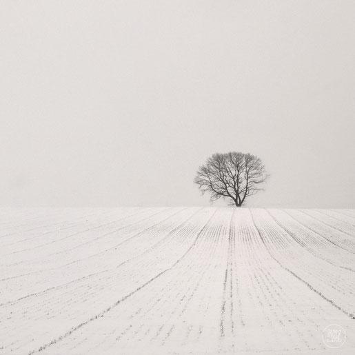 """""""Winter Avenue"""" Art Print von Lena Weisbek"""