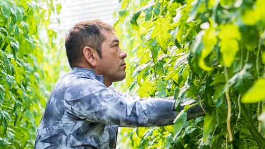 セリグリーンサム株式会社 代表:芹澤 雅司