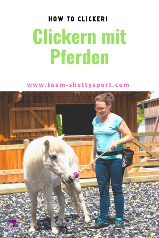 Clickertraining mit Pferden! So funktioniert das Training mit positiver Verstärkung.