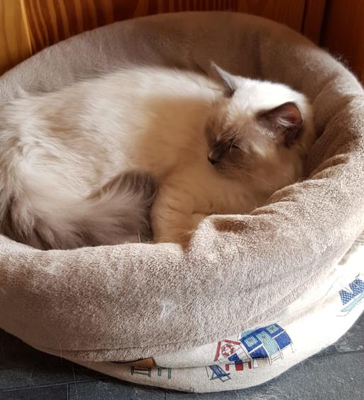 Hochwertiges kuscheliges Katzenbett