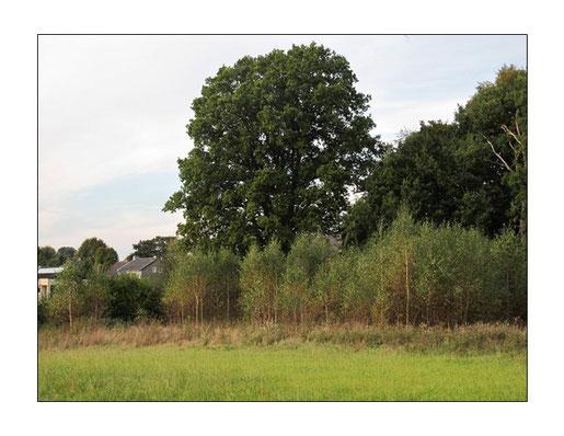 Völkersberg, Bauen in Hergenrath, KS Bau, Kelmis, Steffens, Bauunternehmer Bauen in Belgien,  Umweltzerstörung,