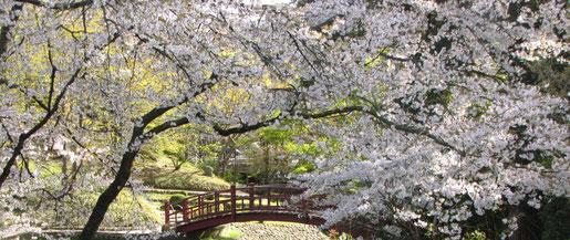 Jardin japonais - Musée Albert Kahn