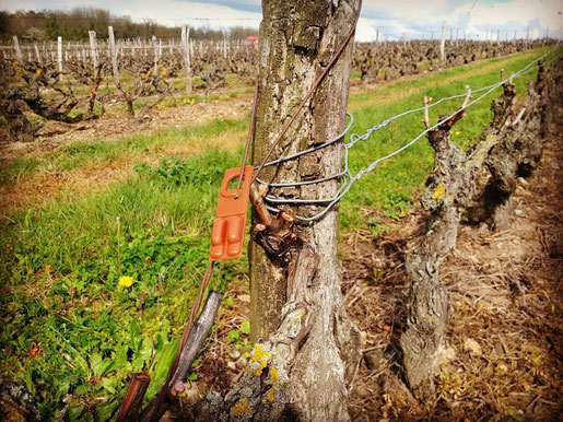loire-wine-tours-sexual-confusion-vineyard-protection