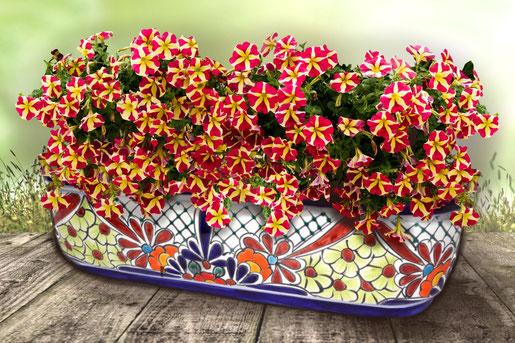 Bunter farbiger Blumenkasten