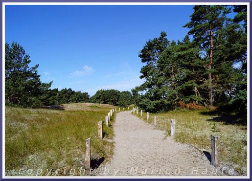 Schilfrohr und Schwarz-Erle sind typische Pflanzen der feuchten bis nassen Riegen.