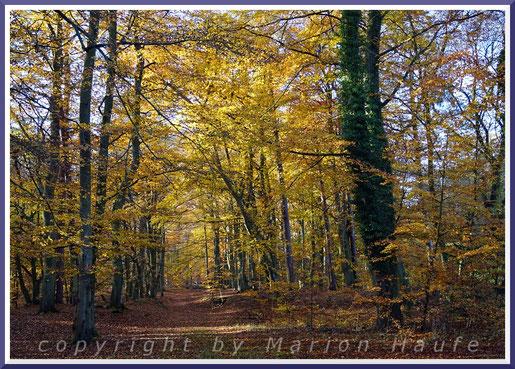 Der Wanderweg in der Nähe der Jagdhütte.