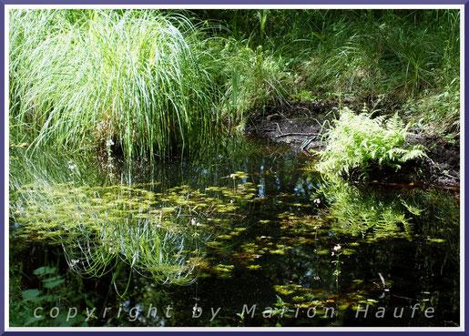 Pflanzliche Lebensgemeinschaft am Fuß einer Schwarz-Erle (Alnus glutinosa) im Frühjahr.