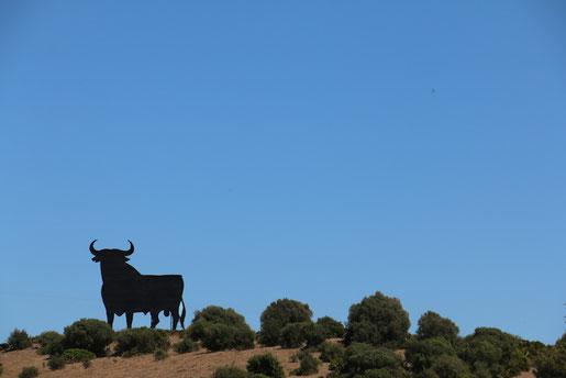 Der Osborne-Stier, der 21mal an Andalusiens Straßenrändern steht (C) Jenny Menzel, Weltwunderer