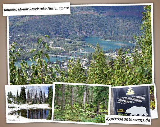 Kanada: Mount Revelstoke Nationalpark