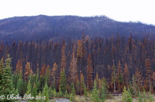 Kootenay Valley Waldbrandgebiet