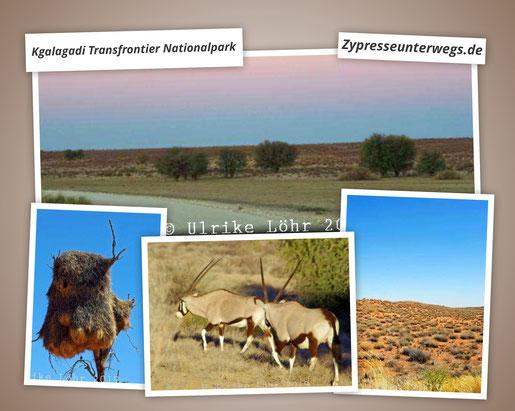 Kalahari pur - Kgalagadi Transfrontier Nationalpark