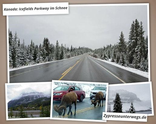 Kanada: Icefields Parkway im Schnee