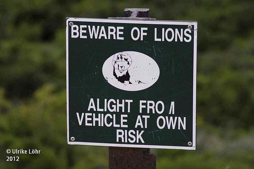 Löwenwarnung im Addo Nationalpark