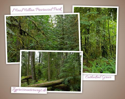Kanada: Cathedral Grove im MacMillan Provincial Park