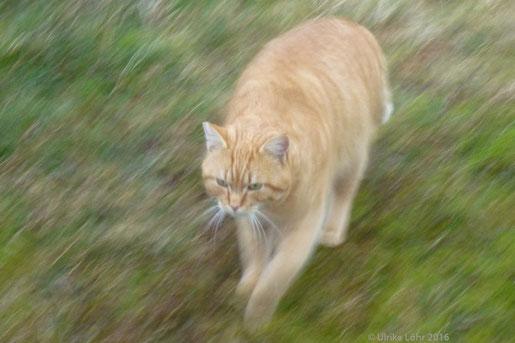 Katzen gibt es auch auf Langeoog...
