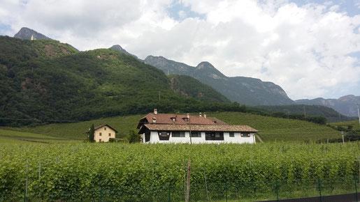 Weinbau in der Region Kalterer See (C) DP 2019