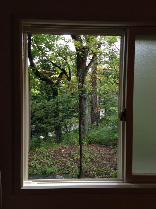 台所の窓から。いつもまっさきに紅葉するヤマザクラが色づき始めています。