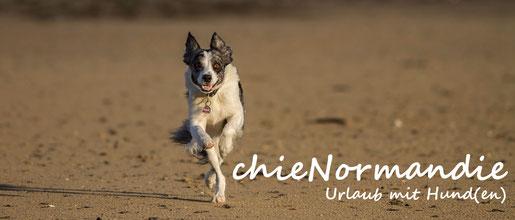 chienormandie – Ihr Reiseführer im Internet für den Urlaub mit Hund in der Normandie