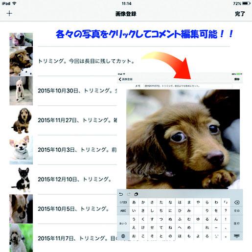 スマートフォンアプリ,写真管理,画像管理,写真,画像,フォトちゃん,画像3