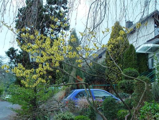 Wintergrüne und immergrne Pflanzen geben dem Garten auch während der kalten Jahreszeit Farbe und Struktur. Foto: BGL.