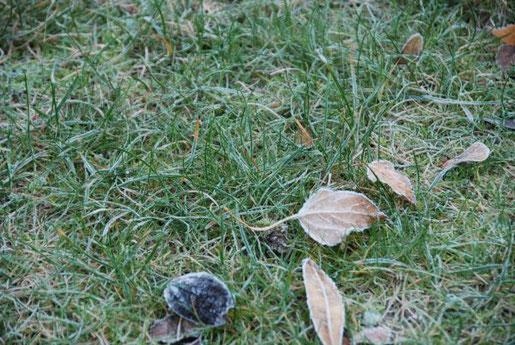 Ein Klassiker: Zur Vermeidung von nachhaltigen Schäden empfiehlt es sich, den Rasen bei Frost oder bei Raureif nicht zu betreten. Bild: Hauert